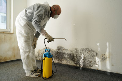 Dealing With Mold Damage
