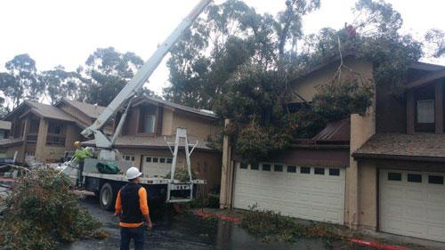 Storm Damage Tree Removal Escondido, California
