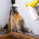 5 Key Reasons to Hire a Professional for Mold Remediation